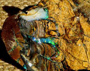 Boulder Opal Rough 14.JPG