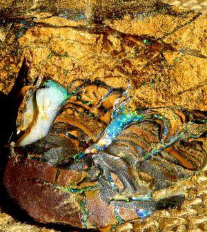 Boulder Opal Rough_15.JPG