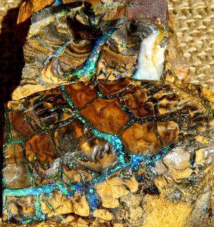 Boulder Opal Rough 19.JPG